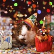 DS-GVO Geburtstag 1 Jahr